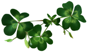 Irish_Shamrocks_PNG_Clipart